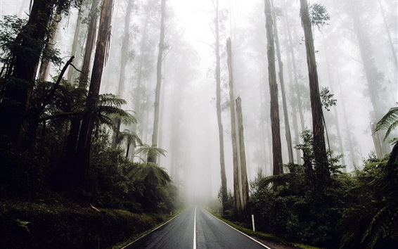Wallpaper Road in the forest, trees, fog