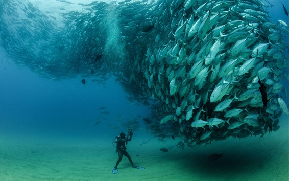Fond d'écran Sardines, poissons sous-marine, plongée, parc national de Cabo Pulmo, Mexique