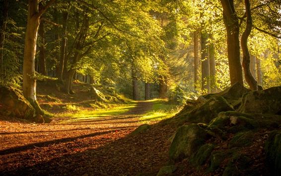 Wallpaper Scotland Aberdeen, trees, path, sunshine