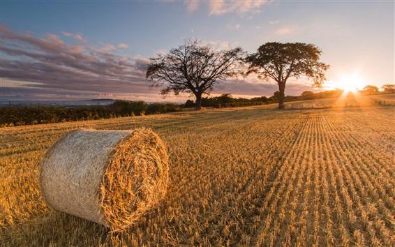 Обои Шотландия, восход солнца, соломы поля, деревья