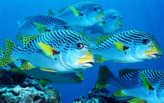 Papéis de Parede Peixe de mar, subaquático