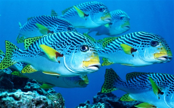 Wallpaper Sea fish, underwater