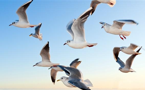 Papéis de Parede gaivotas voando