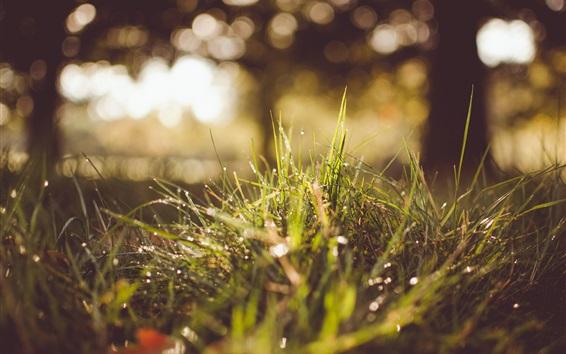 Обои Летняя трава после дождя, капли воды, солнечного света