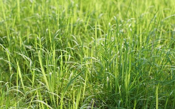 Wallpaper Summer grass, green, sunshine