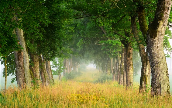 Wallpaper Summer nature scenery, trees, grass, fog, dawn