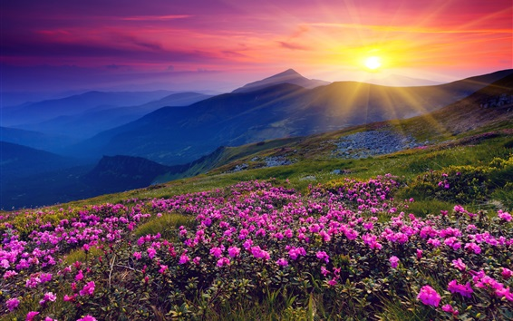 Fondos de pantalla Salida del sol, montañas, flores, hierba, amanecer