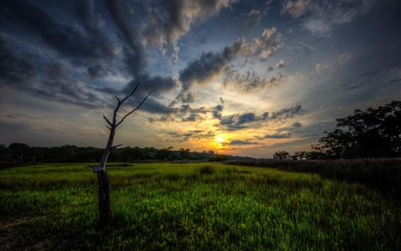 Обои Закат, поле, облака, деревья, закат