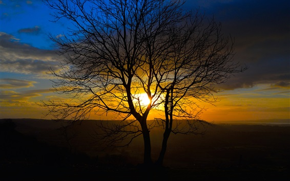 Wallpaper Sunset nature scenery, trees, sun rays, evening