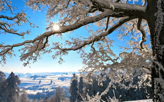 Fond d'écran Suisse, la nature de l'hiver, la neige épaisse, les arbres, les rayons du soleil