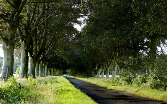 Wallpaper Trees, road, grass, nature landscape