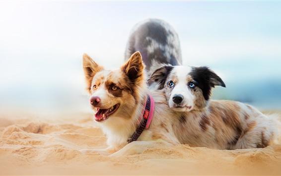 壁紙 ビーチで二匹の犬