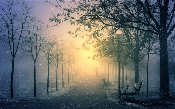 Wallpaper Winter park morning, snow, path, lantern, bench, trees