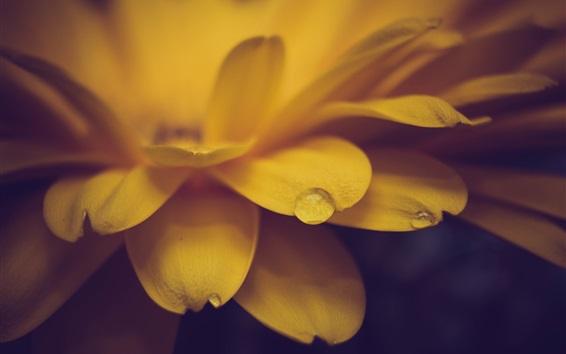 Papéis de Parede Flor amarela close-up, pétalas, orvalho