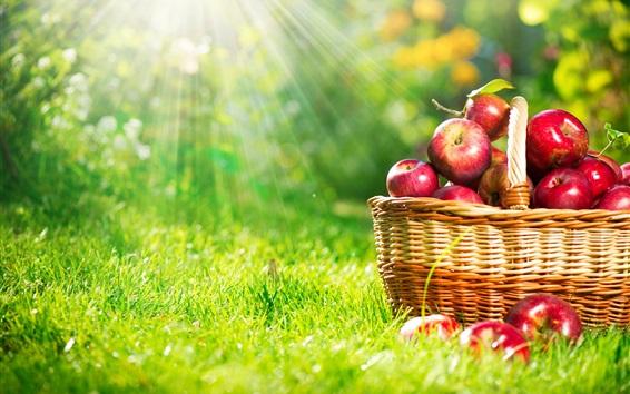 Обои Корзины яблок, солнечные лучи, трава