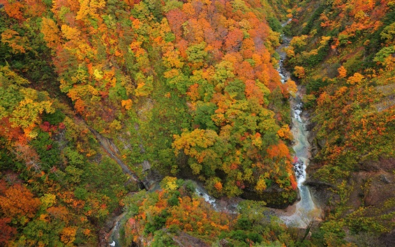Wallpaper Above to view the forest, gorge, river, trees, autumn