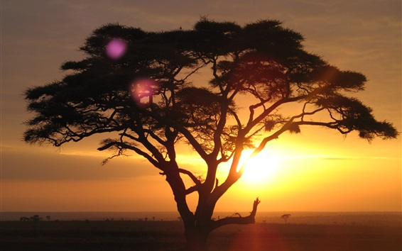 Обои Акации, Национальный парк Серенгети, Танзания, закат