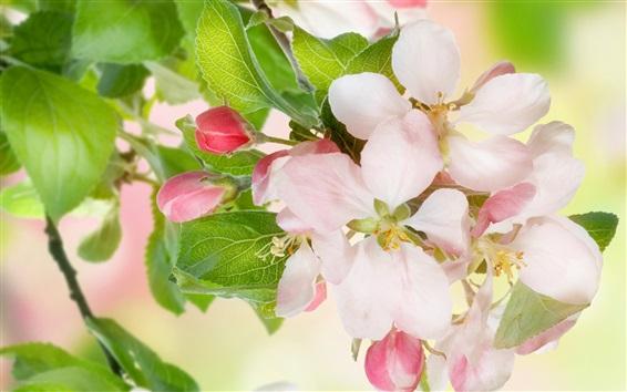 Fond d'écran fleurs d'Apple, arbre, brindilles