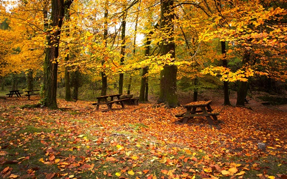 Wallpaper Autumn park, forest, trees, red leaves, benches