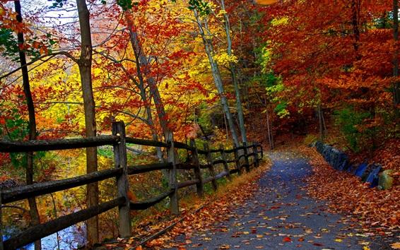 Обои Осенний парк, деревья, забор, дорога, листопад