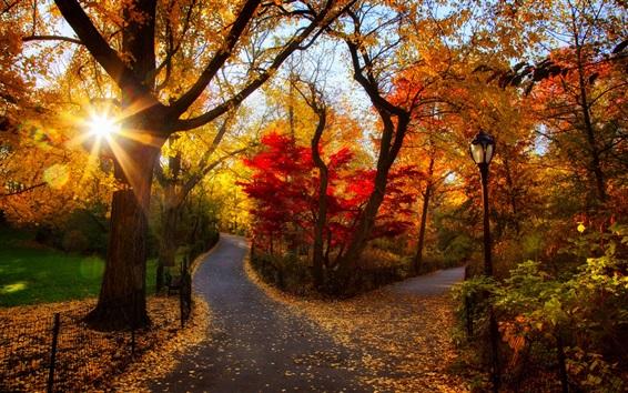 Обои Осенний парк, деревья, желтые листья, солнце, утро