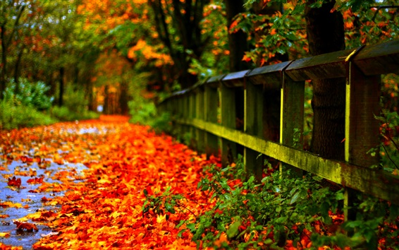 Wallpaper Autumn red leaves on ground, fence, trees, blur background