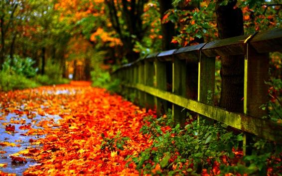 Fond d'écran Automne feuilles rouges sur le sol, clôture, arbres, flou fond
