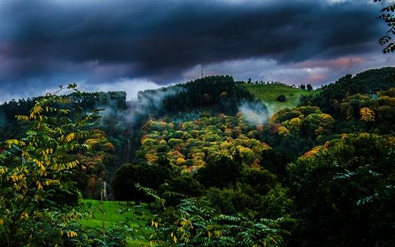 배경 화면 가을, 나무, 구름, 새벽