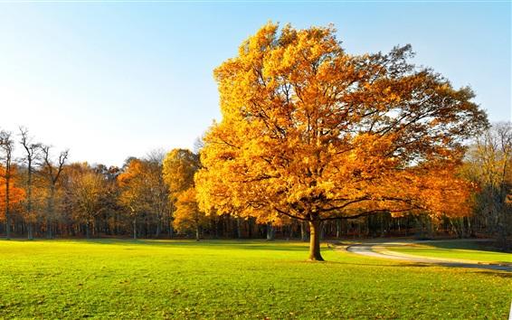 Обои Осень, деревья, парк, трава, путь