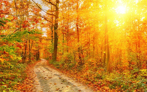 Wallpaper Beautiful autumn forest, trees, path, sun rays