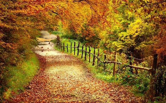 Fondos de pantalla Paisaje hermoso del otoño, árboles, hojas amarillas, camino