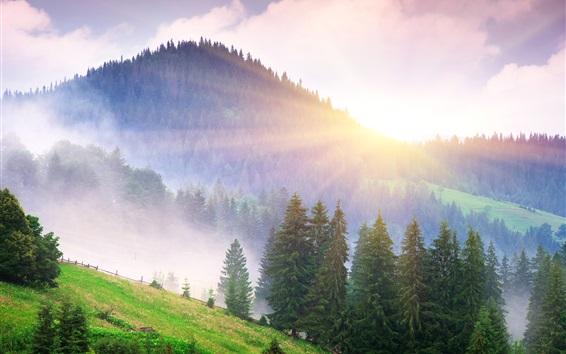 Обои Прекрасное утро природа, горы, туман, рассвет, деревья, солнечные лучи
