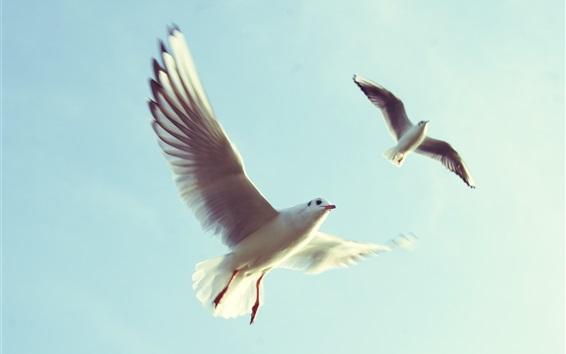 壁紙 鳥の飛行、翼、カモメ、空