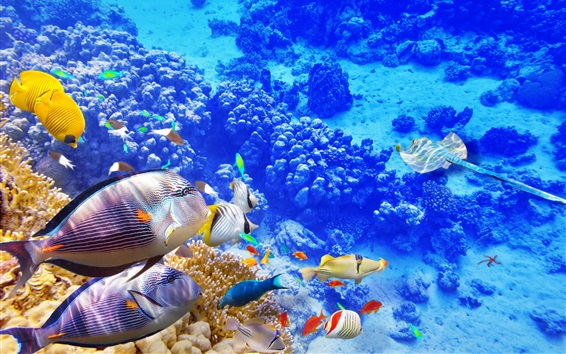 Wallpaper Blue sea underwater world, coral, tropical fishes