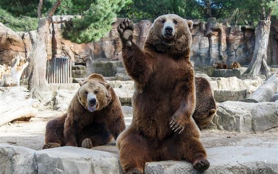 Papéis de Parede Os ursos pardos no jardim zoológico