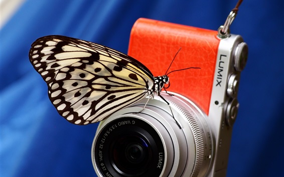 Wallpaper Butterfly and digital camera