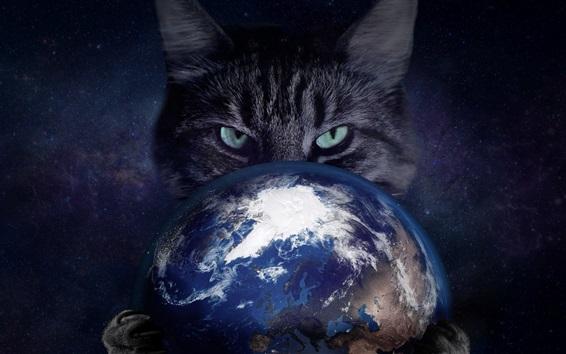 배경 화면 고양이 지구, 창조적 인 사진을 잡을