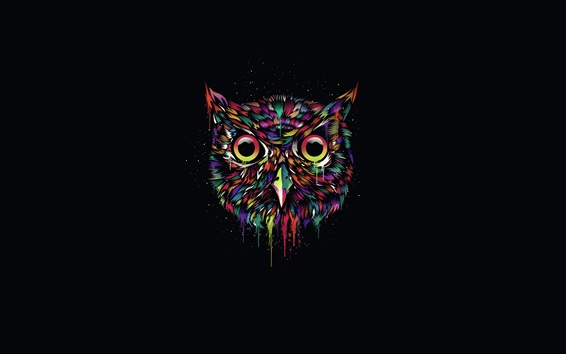 Wallpaper Colorful owl, creative design, black background