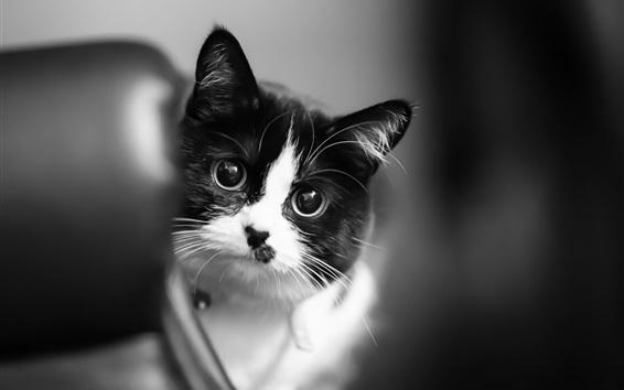 Wallpaper Cute kitten, white black