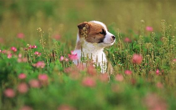 Fond d'écran chiot mignon, herbe, fleurs, flou