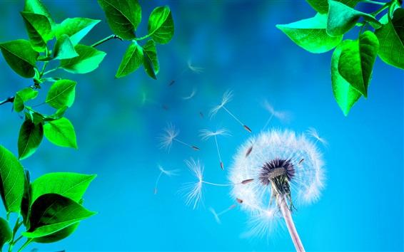 Fond d'écran Pissenlit, feuilles vertes, fond bleu