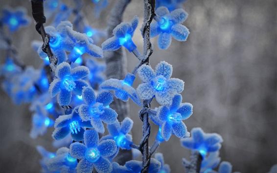 Papéis de Parede luzes do festival, flores azuis