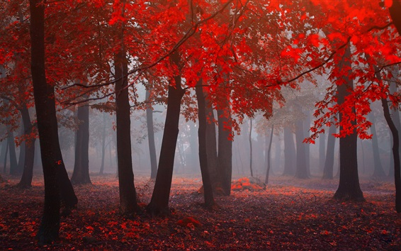 Wallpaper Forest in autumn, red leaves, trees, fog