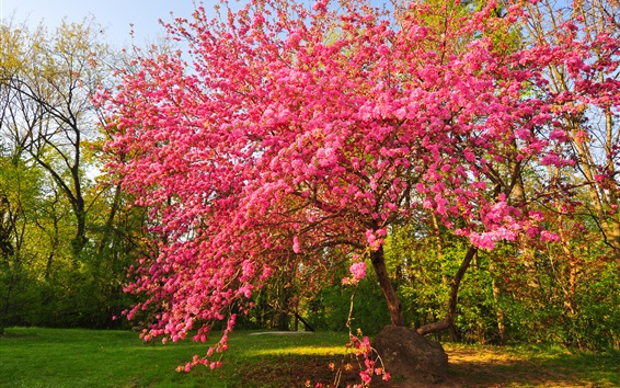Wallpaper Garden, pink flowers tree