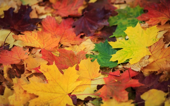 Wallpaper Golden autumn, colorful leaves, green, yellow, red