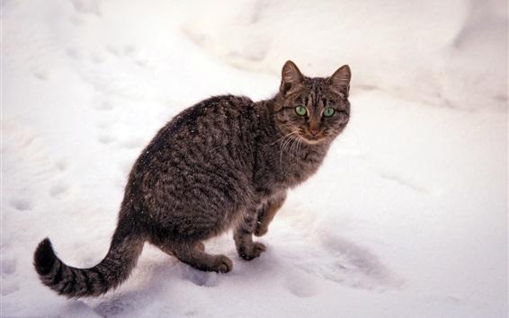 Обои Серый полосатый кот, зеленые глаза, зима, снег