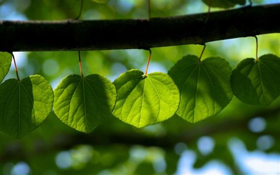 Обои Зеленые листья, ветви дерева, утро