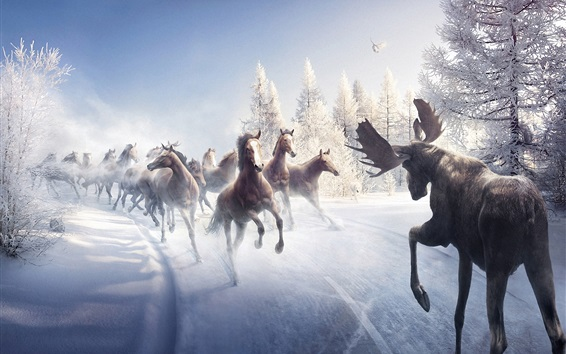 Wallpaper Horses in winter running