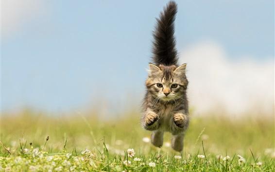 Wallpaper Kitten running, jump, wildflowers