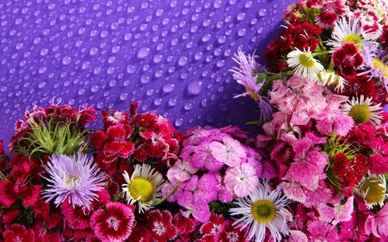 Wallpaper Lot of flowers, water droplets